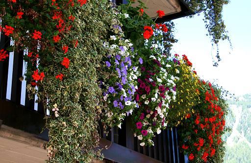 Nave un paese pi bello con balconi fioriti for Libri per fioristi